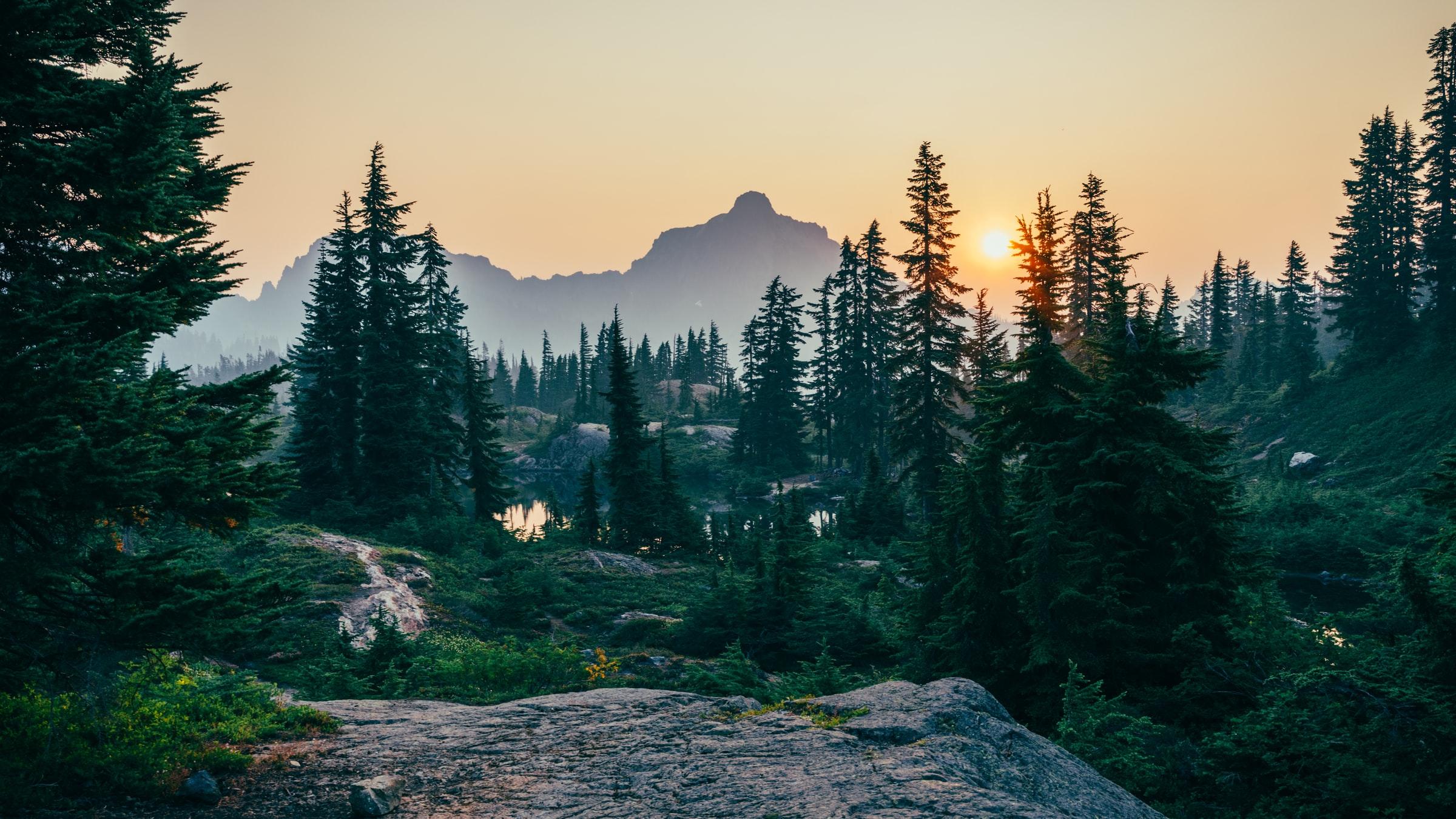 skog i soluppgång